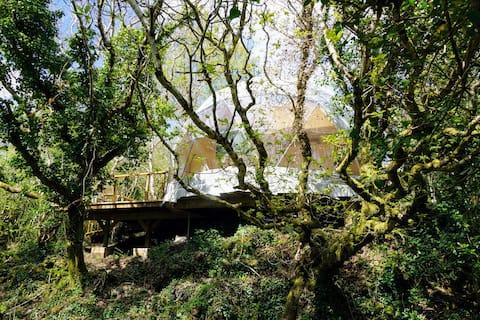Treehouse Dome @ Fernwood.eco