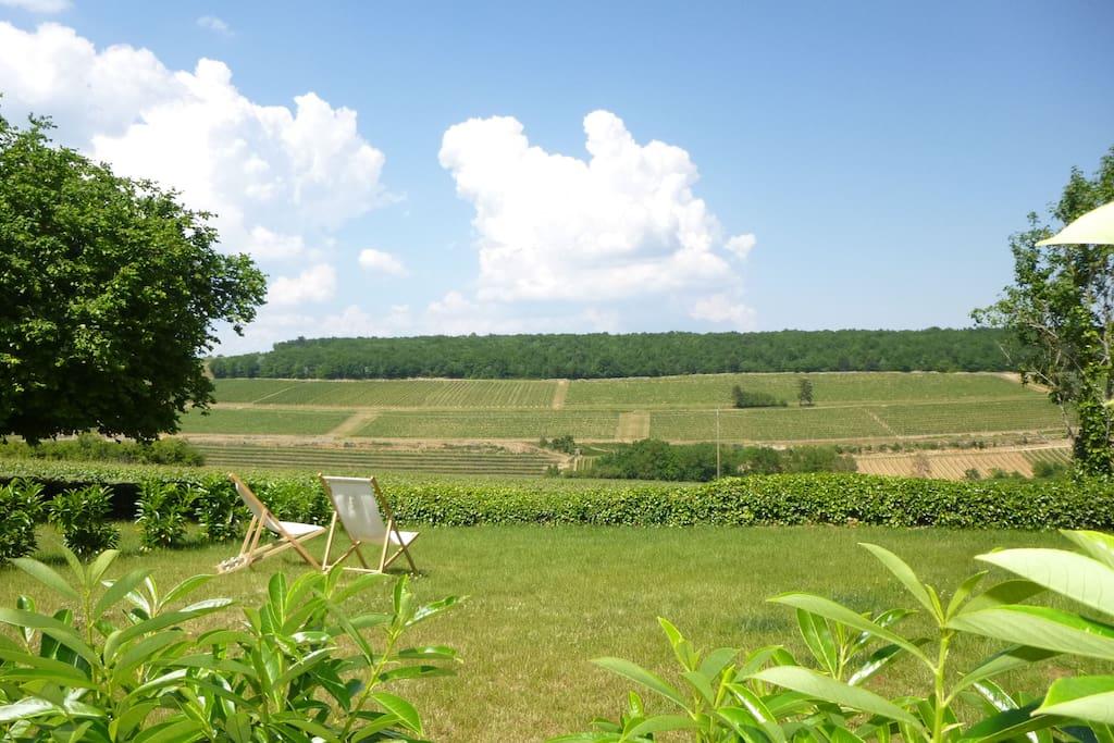 Les vignes de Bourgogne à perte de vue !