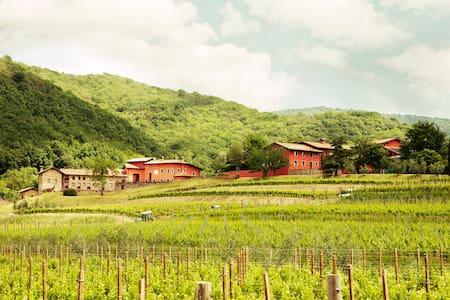 Casa Sassi - Winery stay  - Colloredo di Soffumbergo - 独立屋