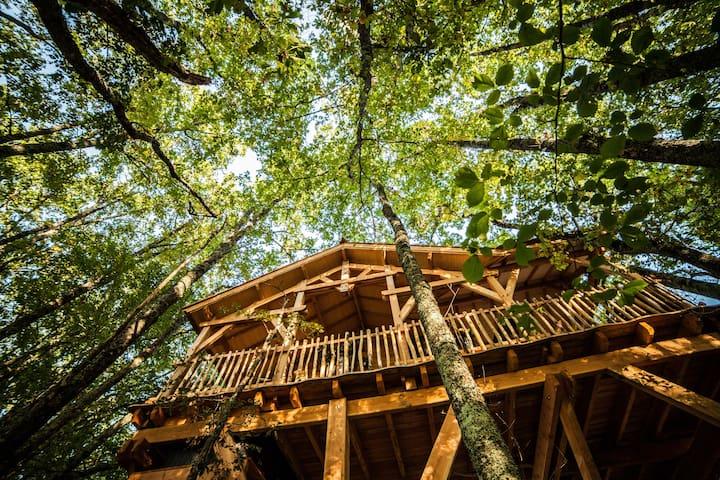 Cabanes dans les arbres - Saint-émilion