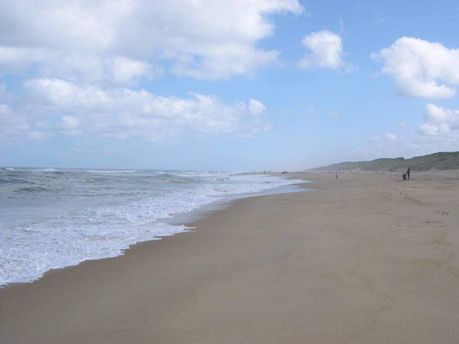 Seignosse océan : plage