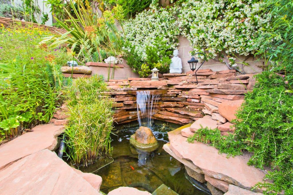Back yard pond.