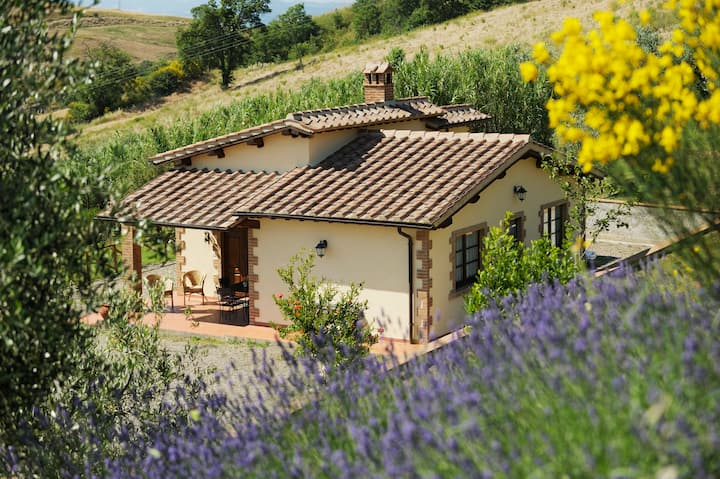 Coccinella. Cottages in Tuscan Country