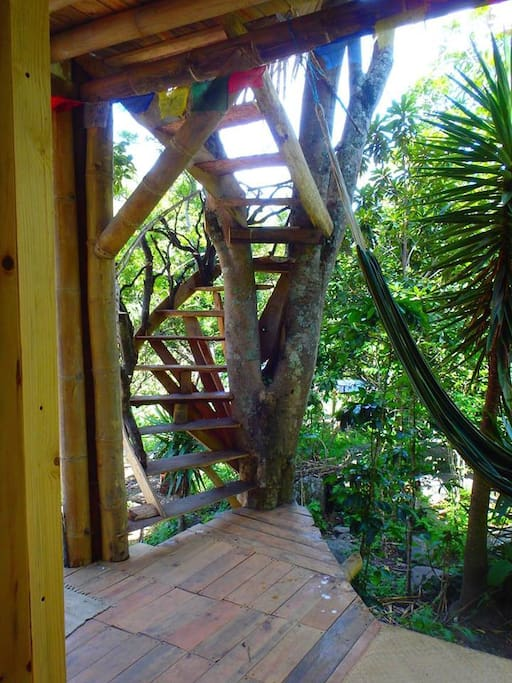 """""""Through-the-tree"""" spiral stairs lead to two of our private rooms"""