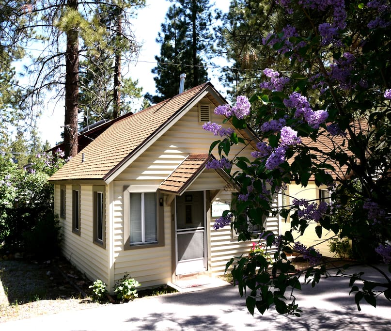 Cozy big bear cabin wild flower cabins for rent in big for Cabins big bear