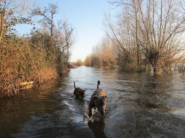 My dogs loving the flood water on the road between Hambridge and Kingsbury Episcopi.