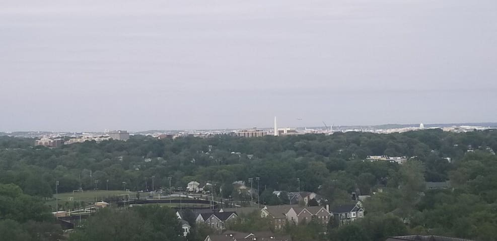 DC oasis, view of Washington Monument