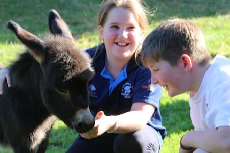 Donkey Tales Farm Cottages-Simpsons - Maryborough Vic - Almhütte