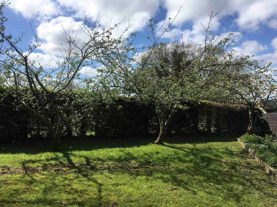 Apple trees at Angler's Lodge