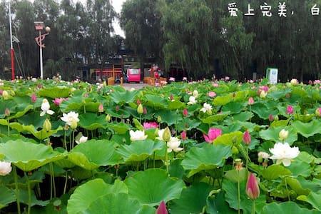 北方四周环水的小台湾,白洋淀中的望月岛 - Baoding