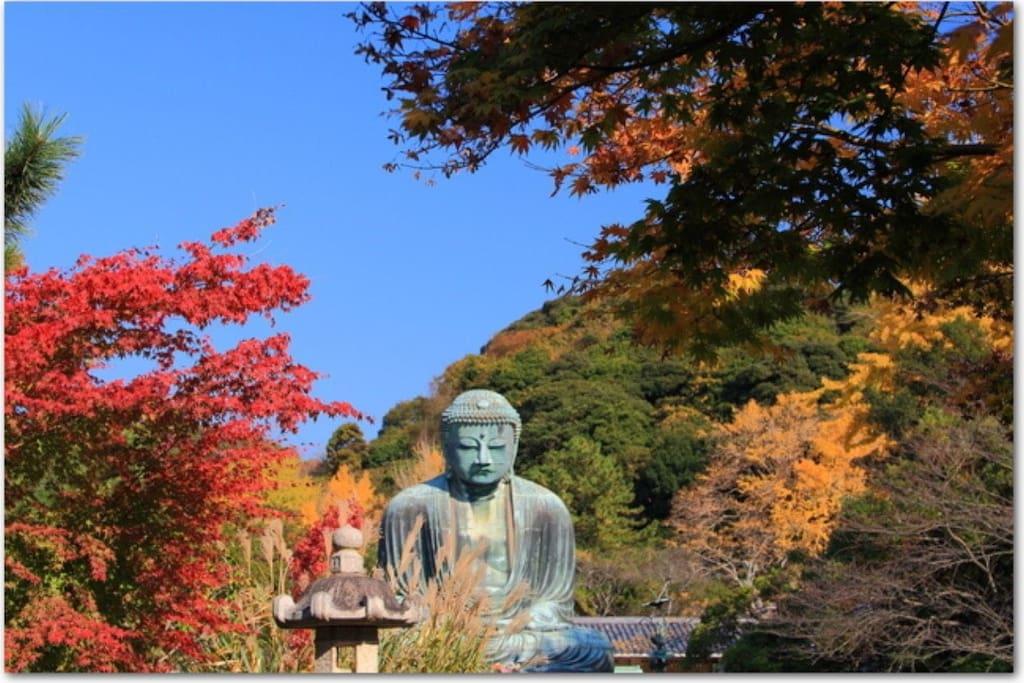 Autumn leaves of kamakura and big budda.