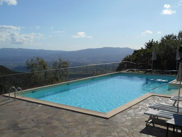 House with pool among olive trees plantation - Reggello