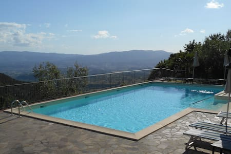 House with pool among olive trees plantation - Reggello - House