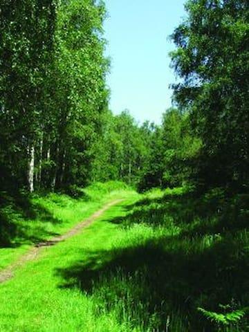 Beautiful heath/woodland a stone throw away