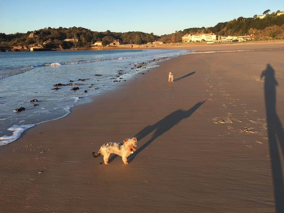 St Brelades Bay ( and the dogs)