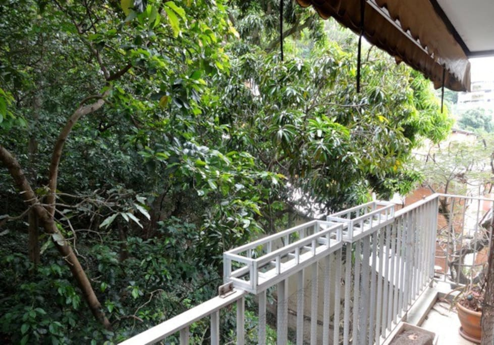 Balcony facing the forest