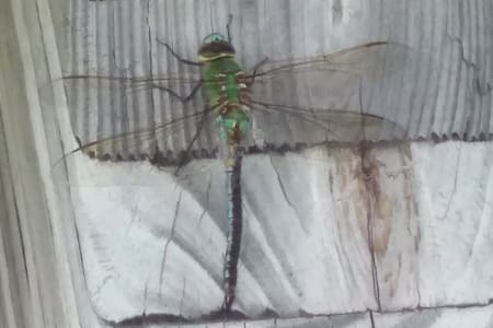 Dragonfly retreat