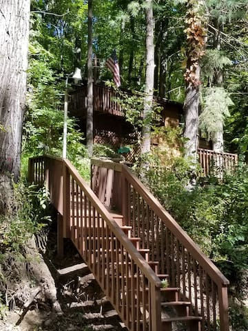 Stairs up to the Treetops!