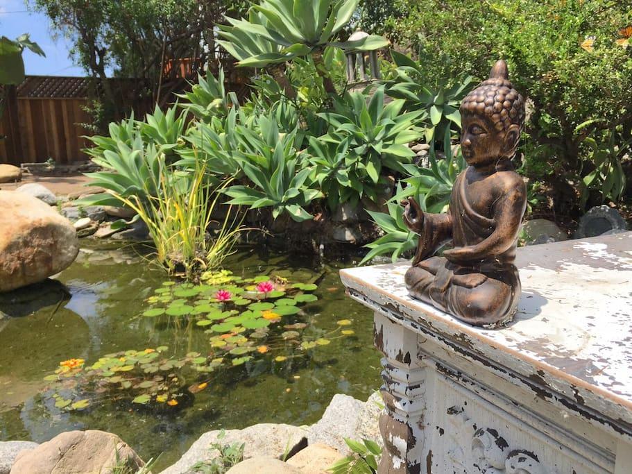 Zen pond in backyard