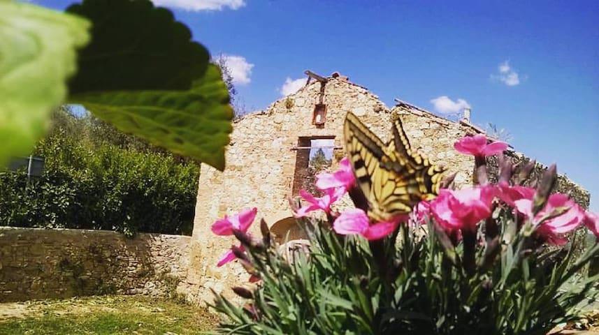 Casa Tolfe, allegro casolare tra campagna e città - Siena - Hus