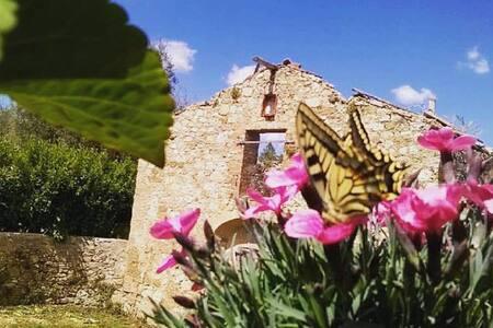 Casa Tolfe, allegro casolare tra campagna e città - Siena - Casa