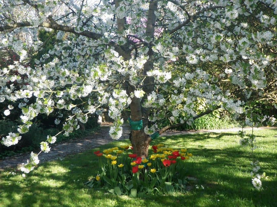 De beaux arbres fruitiers prêts à nous régaler !