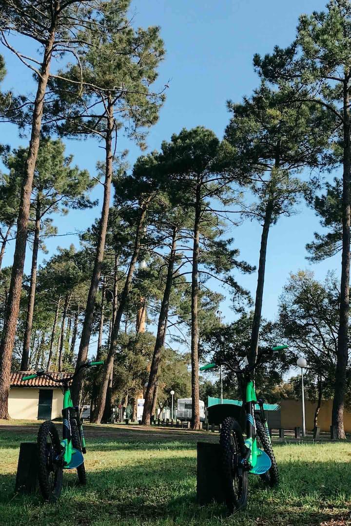 Notre emplacement sous les pins Landais
