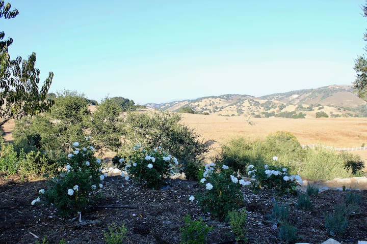 Views looking toward Los Olivos