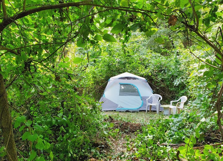 Private 10' Tent in the woods with shared pool