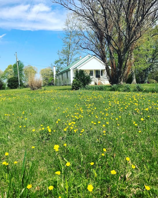 Front yard view in the Spring