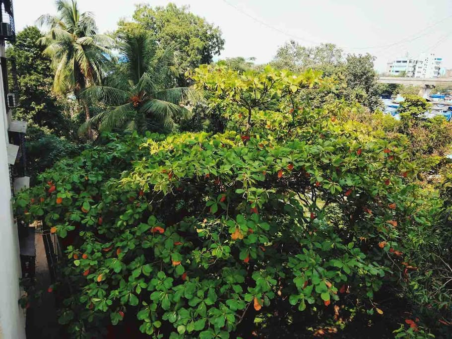 View from room balcony. Watch out for parrots which often come to these trees