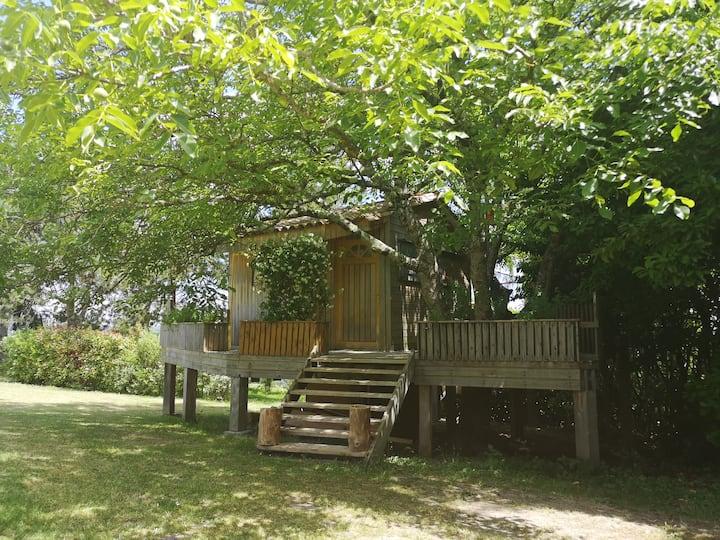 Cabane en bois climatisée