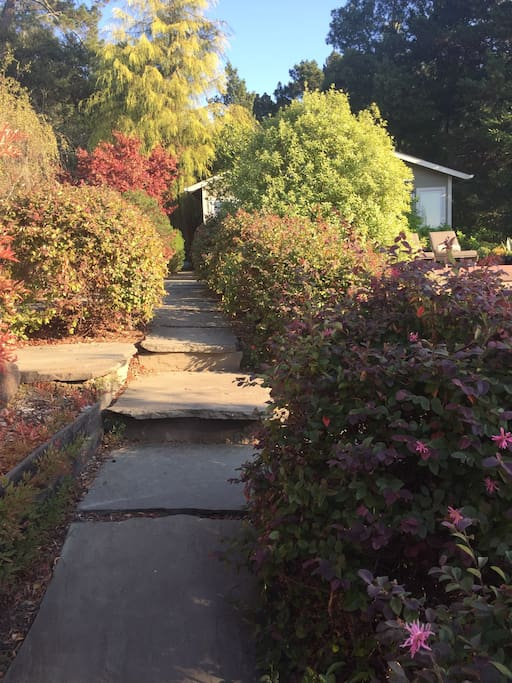 Pathway with steps up to studio unit -- lit at night