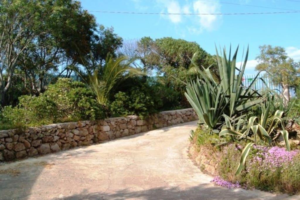 Scorcio del giardino mediterraneo