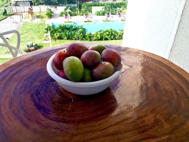 Mangos from the neighborhood trees.