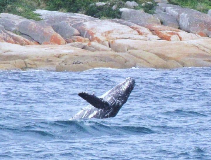 Whale Breach Cottage