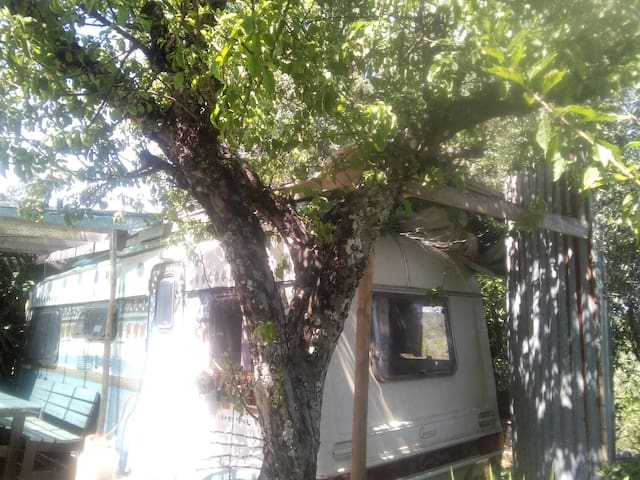 Apple Tree Garden Caravan