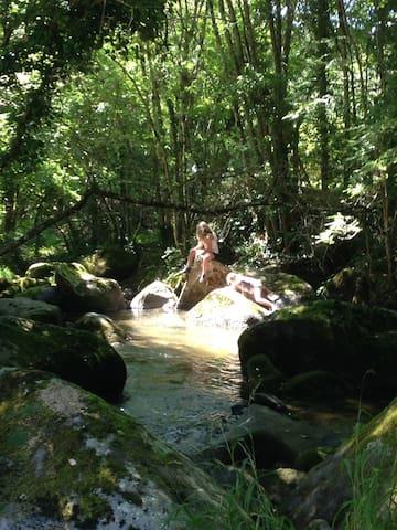 Brook dipping in dappled shade