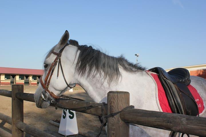 Equitation à proximité