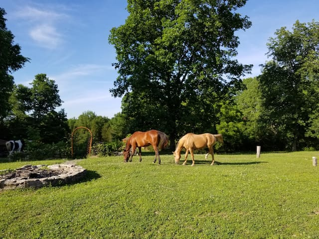 Most of the horses are free-roam and you are likely to have an amazing encounter!