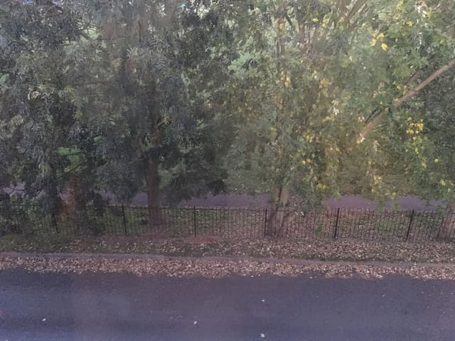 View from bedroom window of park