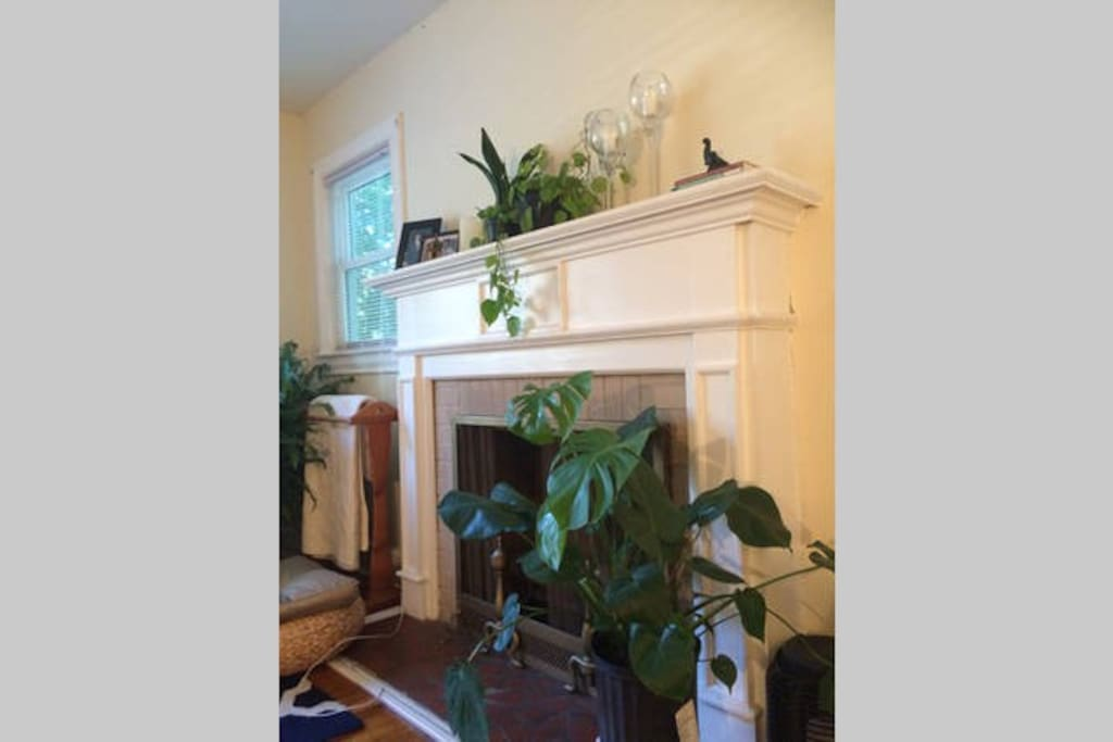 Functional fireplace with a ton of natural air purifiers.