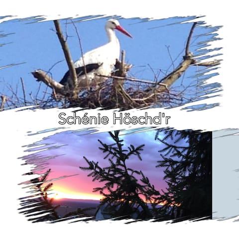 La cigogne, animal emblématique de l'Alsace. Et pourquoi n'en croiseriez-vous pas durant votre séjour ?