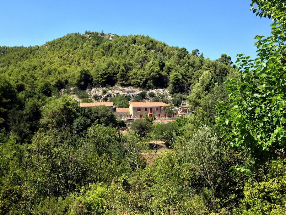 Villa Salome - Surrounded by woods - green nature and blue sky.