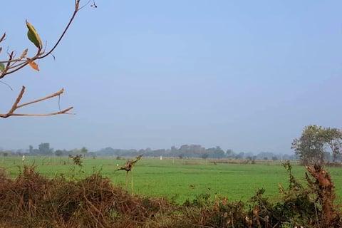 Mohan Farms - Organic Farm Stay