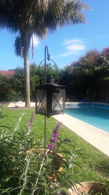 Pileta, jardin con hermosa Palmera y amplio follaje.