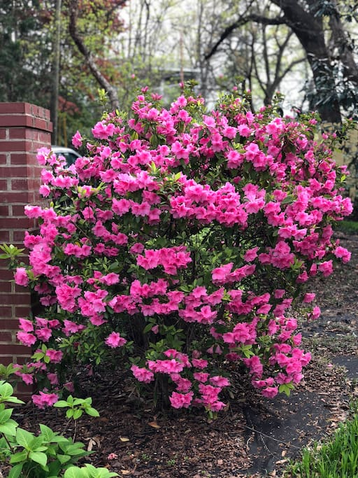 Beautiful flowers in the spring.