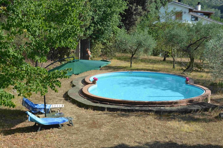 Relax under the olive trees in the Sabina
