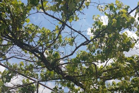 Perla Sebina (apt Almana)-1 km da TheFloatingPiers - Sale Marasino