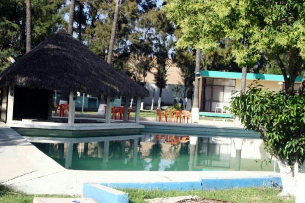 Swimming pool & gardens